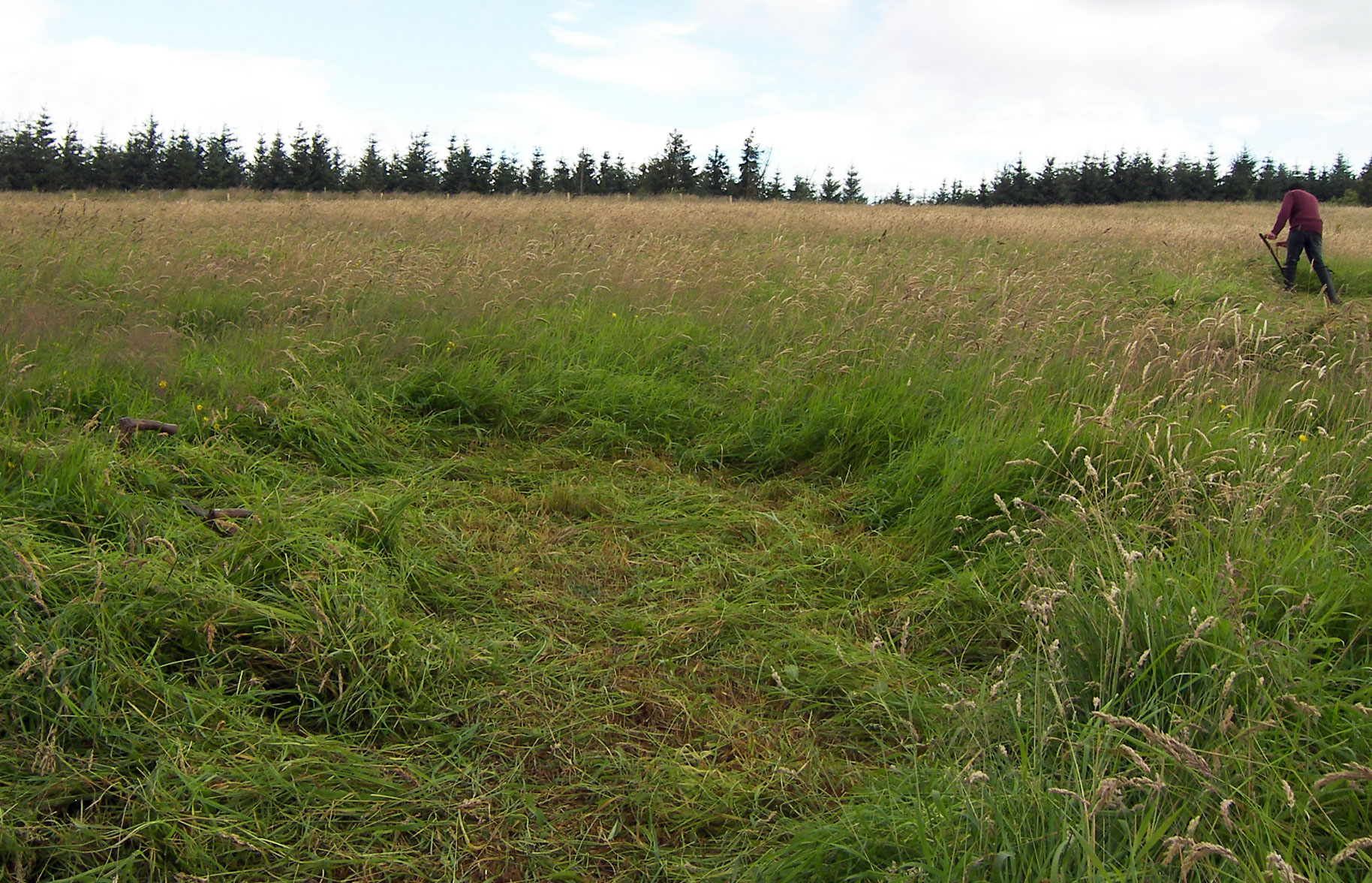 A 'receptor' meadow where species numbers have declined.