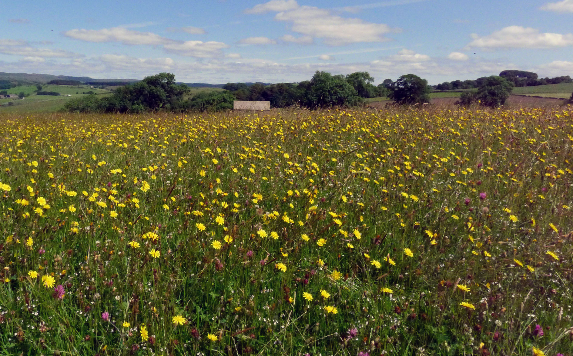 A traditionally managed species-rich meadow where seed can be harvested