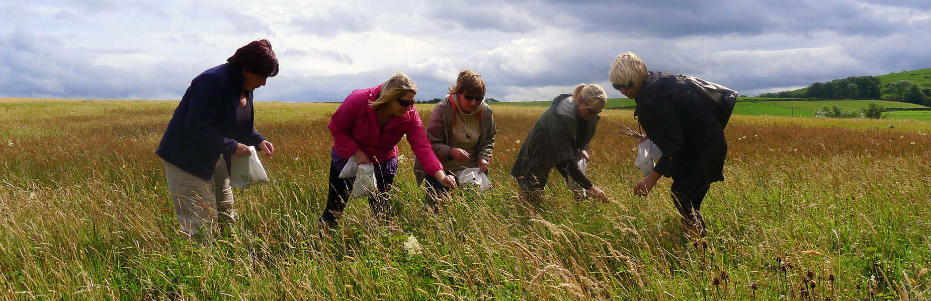 Collecting wildflower seed in a species rich hay meadow