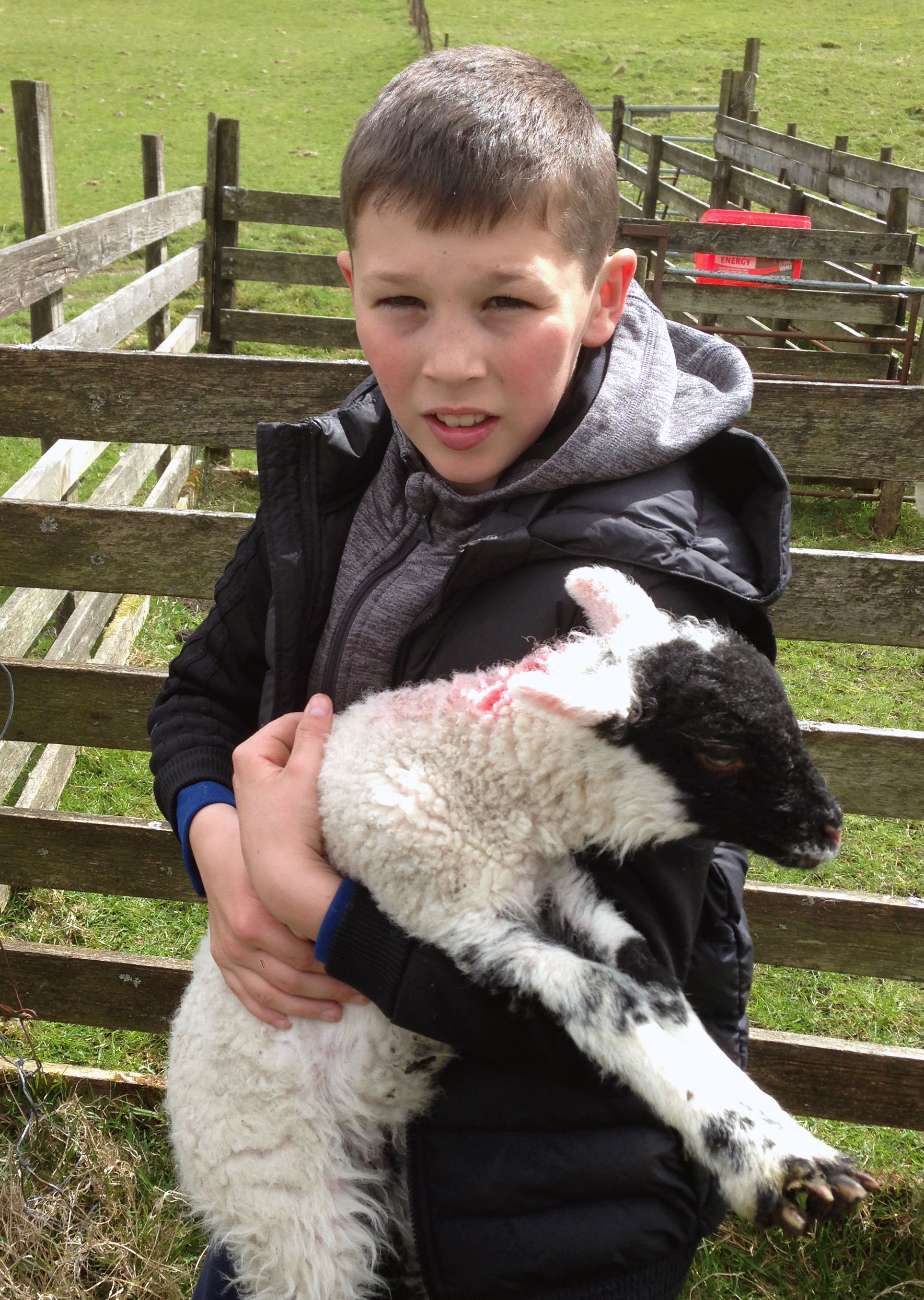 Lambing in the Yorkshire Dales