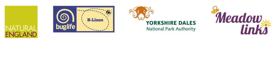 Meadow Links is delivered in partnership with the Yorkshire Dales National Park Authority, Buglife and Natural England.