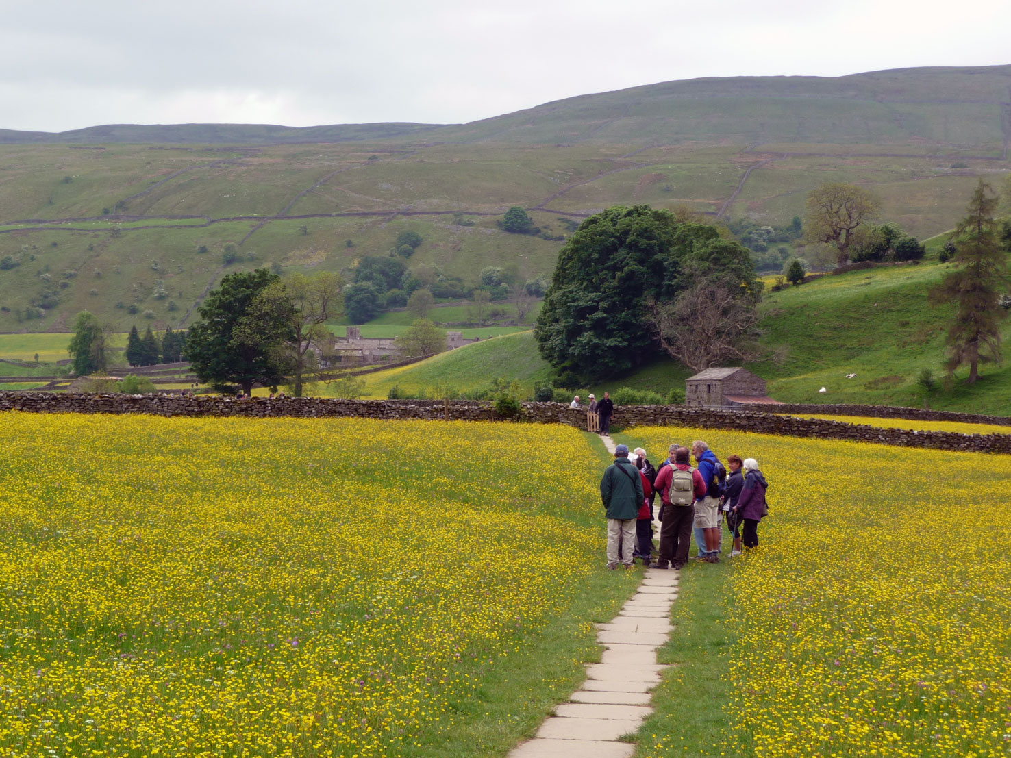Muker wildflower meadows, Swaledale in the Yorkshire Dales
