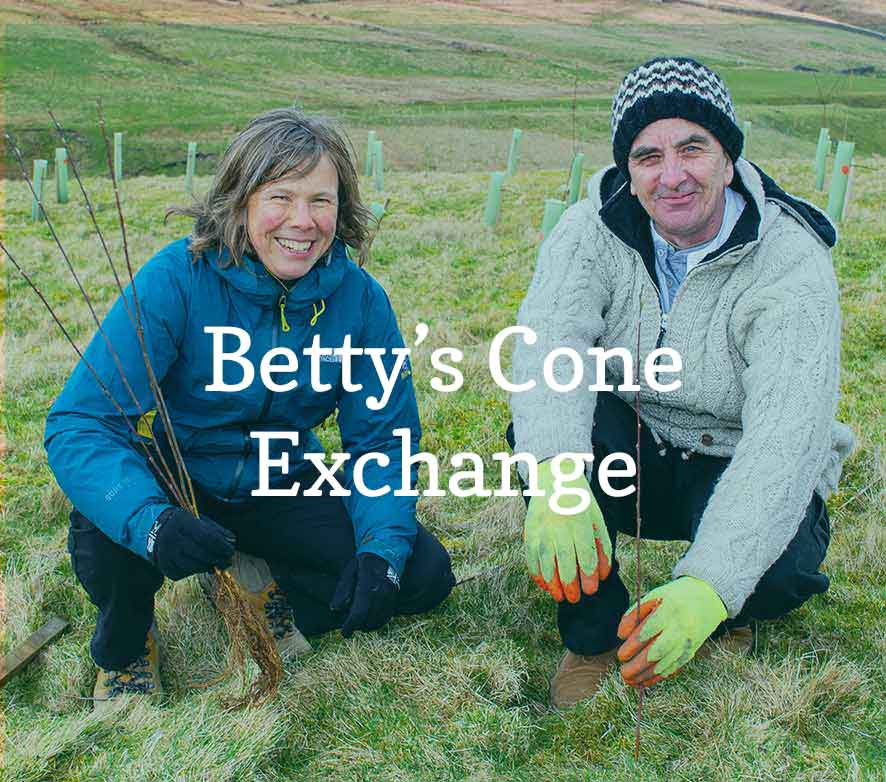 Betty's Cone Exchange supports tree planting