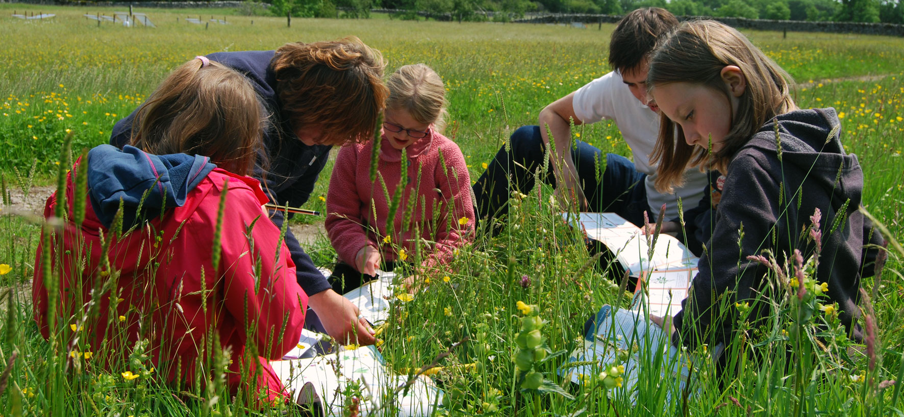 Hay meadow conservation work with schools