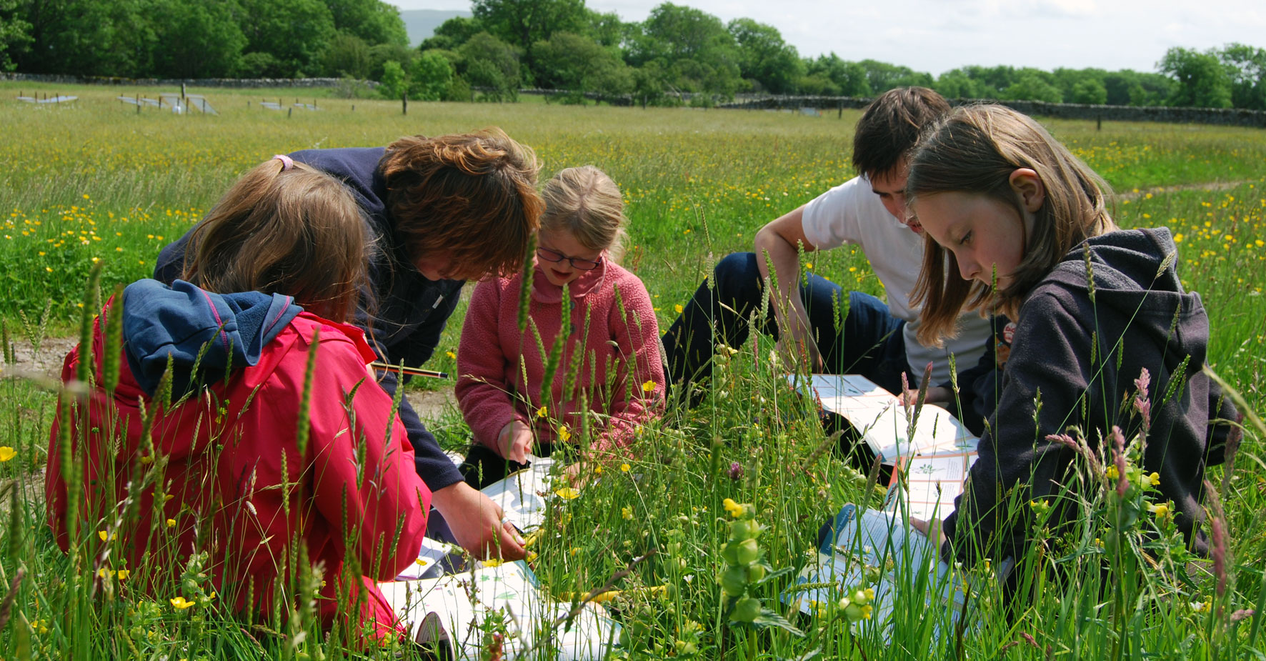 Working with schools to help children discover and learn about hay meadows
